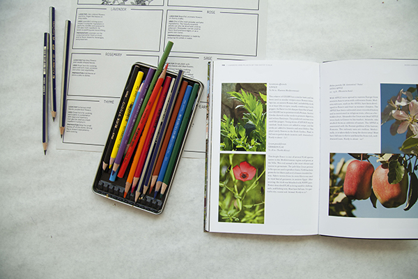 Colored pencils and an open book