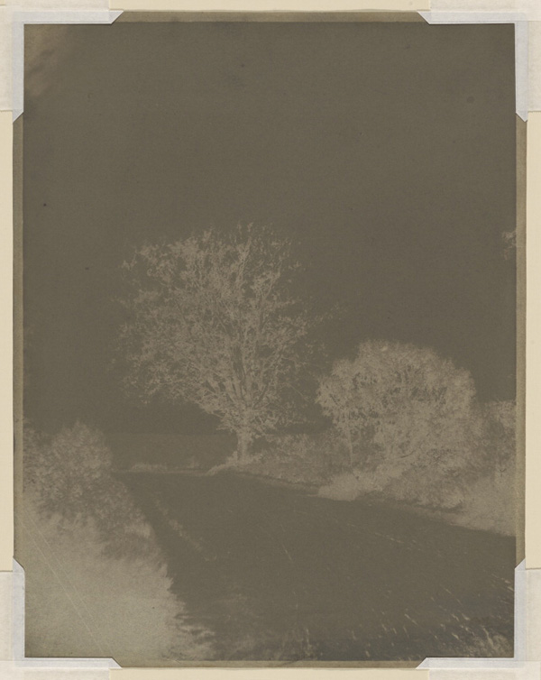 Tree at the Side of a Road / John Beasley Greene
