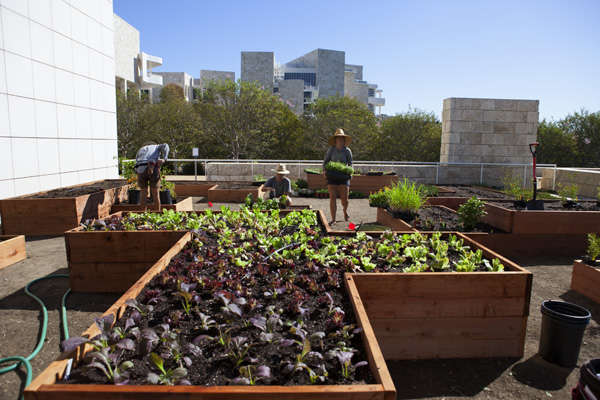 A Salad Garden Grows at the Getty: An Interview with Julia Sherman of Salad for President
